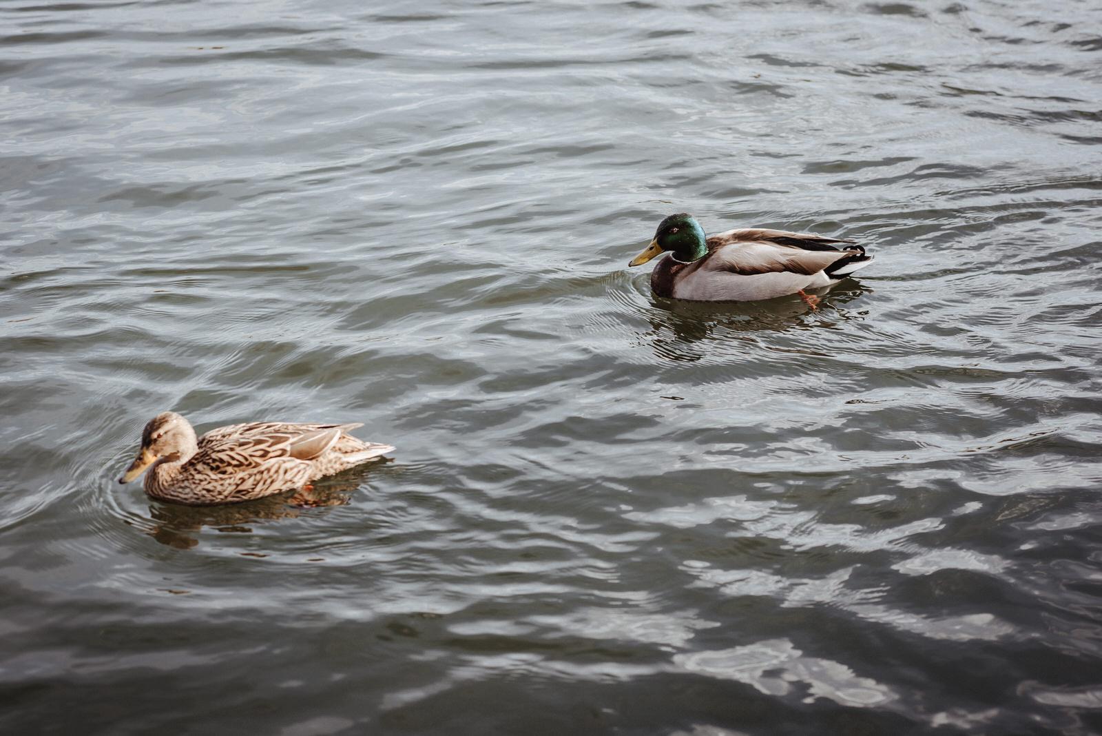 Paar Shooting am Fluss